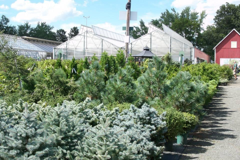 16-shrubs-10