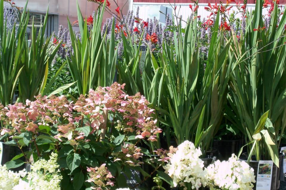16-shrubs-2