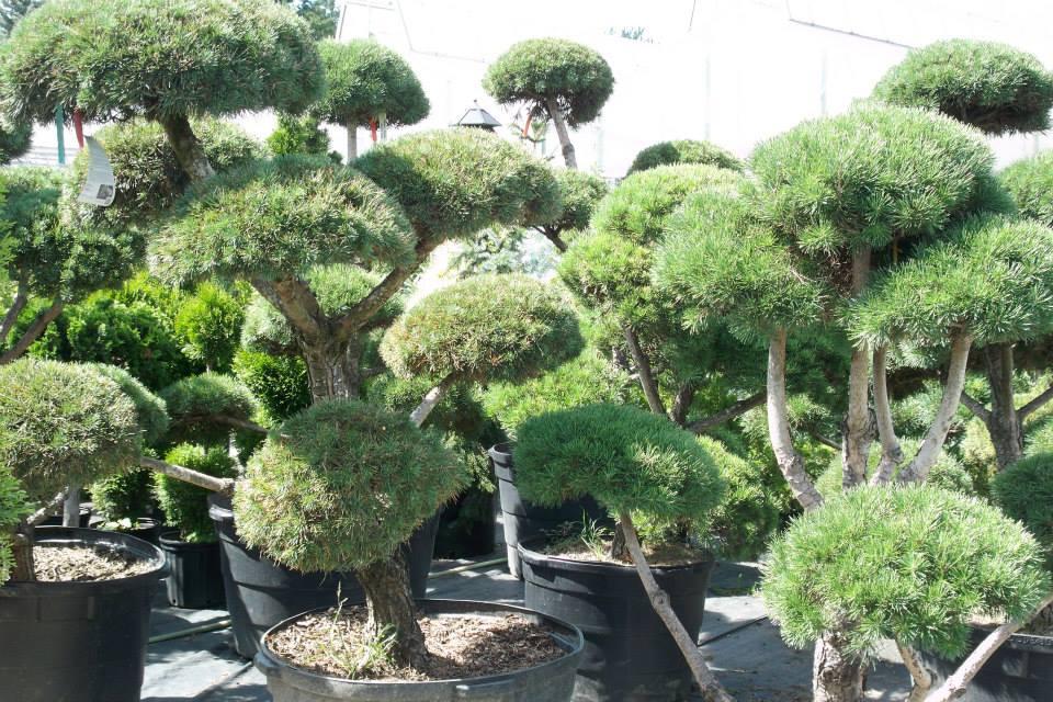 16-shrubs-6