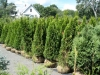 16-shrubs-11