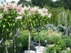 16-shrubs-12