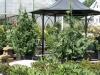 16-shrubs-13