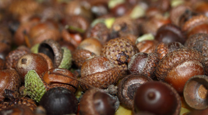Acorns Driving You Nuts?