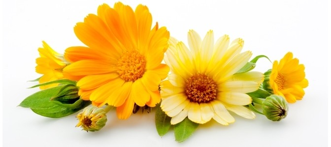 Flowers with Vegetables