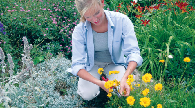 Tips for Preparing a Planting Bed