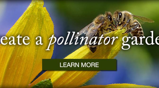 Create a Pollinator Garden