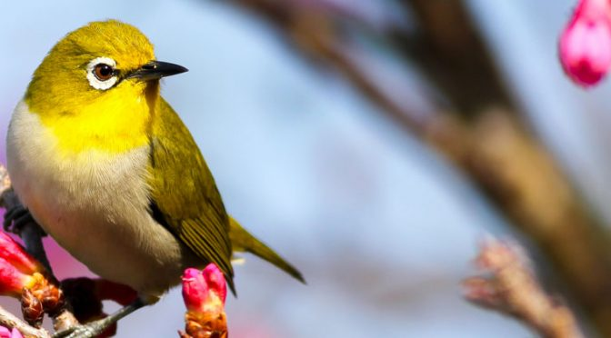 Birds in the Garden: Creating a Haven for Colorful Birds in Your Yard