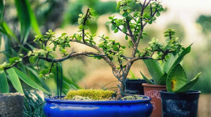 Bonsai for Beginners