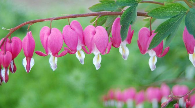 10 Romantic Flowers and their Meanings