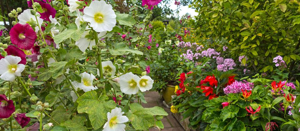 The Elements of Texture in the Garden - 16 Acres Garden Center